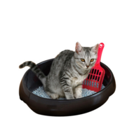 爱丽思开放式猫厕所PNE-500H黒 394×500×270mm
