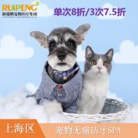 【阿闻上海】宠物微笑计划-无痛洁牙spa 单次犬0-10kg