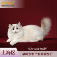 【阿闻上海】猫咪水油平衡高端洗护首次体验 猫2-5kg