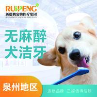 【泉州阿闻】无麻醉犬洁牙套餐 0-10kg