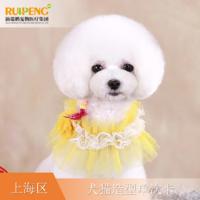 【阿闻上海】犬猫经典造型单次卡(市区版) 犬6-10kg