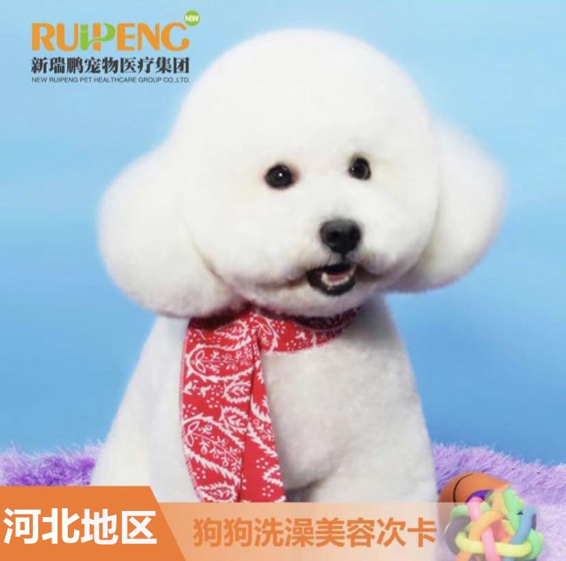河北丨犬美容B套餐5赠5 犬<10kg